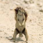 squirrel_nuts.jpg