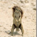 squirrel_nuts_thumb.jpg