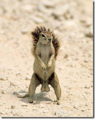 squirrel_nuts